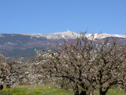"Mont Ventoux is a mountain in the Provence region and has been dubbed the ""Giant of Provence"""